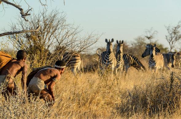 haina-kalahari-lodge-bush-men-hunting-zebra-590x390