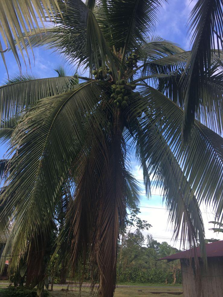 TropicalPlant